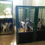 экскурсия в закулисную часть ижевского цирка собачий вальер