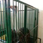 экскурсия в закулисную часть ижевского цирка страус