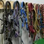 экскурсия в закулисную часть ижевского цирка уздечки для лошадей