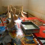 экскурсия в закулисную часть ижевского цирка вальер с пеликанами