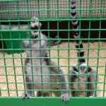 экскурсия в закулисную часть ижевского цирка звери