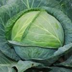 Как правильно выращивать капусту