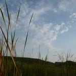 Журавли над озером Ольховым урочище Обухи близ села Вятское Каракулинский район