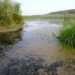 болотистая часть озера Ольховое близ села Вятское Каракулинский район