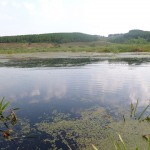 древнее озеро Ольховое урочище Обухи