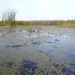 озеро Ольховое близ села Вятское Каракулинский район