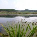 озеро Ольховое урочище Обухи