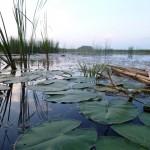 озеро Ольховое урочище Обухи Каракулинский район