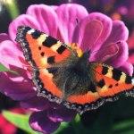 Фотовыставка Екатерины Мироновой «Небо. Цветы. Женщина»