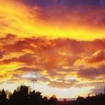 Фотовыставка ижевчанки Екатерины Мироновой «Небо. Цветы. Женщина»