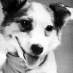 собака-космонавт Звездочка