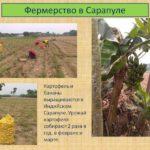 Фермерство в Сарапуле в Индии
