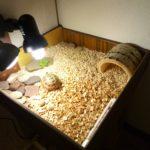Домик сухопутной черепахи в террариуме